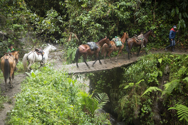 Wooden bridge with horses passing over | Chemin de paix vers Marquetalia | Colombie