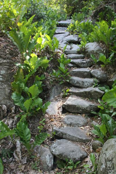 Stone path leading to Pueblito | Pueblito Chairama ruins | 哥伦比亚