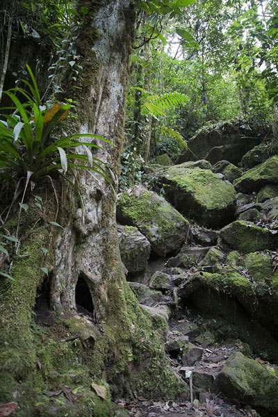 Rocks overgrown with moss: part of the trail to the Salto de Candelas waterfall | Salto de Candelas | Colombia