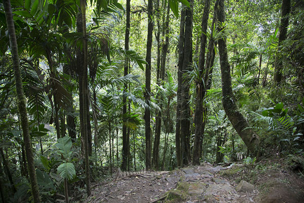 Foto van The forest through which the trail to the waterfall runsSalto de Candelas - Colombia