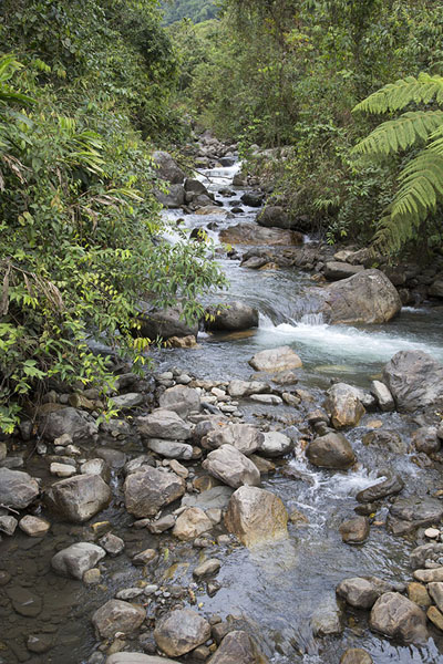Photo de River on the way to the waterfallSalto de Candelas - Colombie