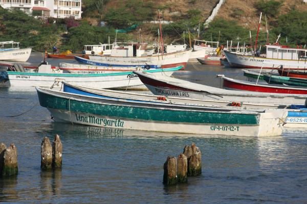 Picture of Taganga (Colombia): Boats in the bay of Taganga
