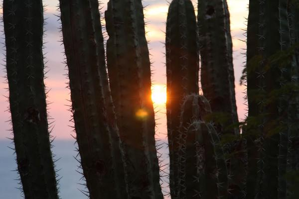 Picture of Taganga (Colombia): Sun setting through cactus