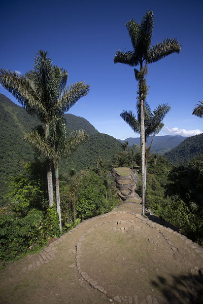Ciudad Perdida seen from the southern viewpoint with palm trees and the Buritaca valley in the background | Teyuna | Colombia