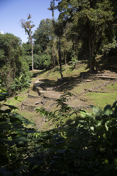 Stone terraces on a hill below the central area of Ciudad Perdida - 哥伦比亚 - 北美洲
