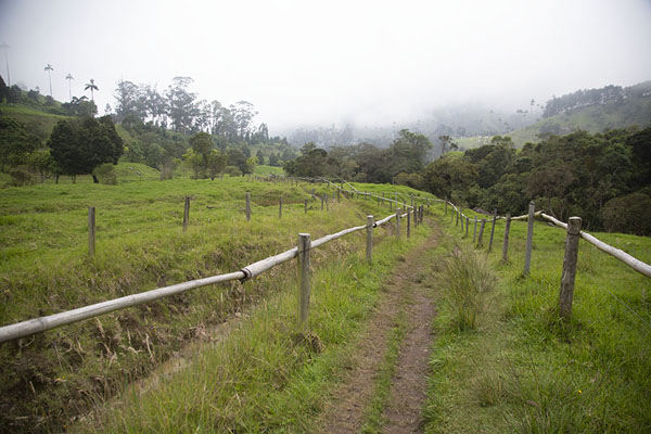 Foto de Trail connecting Cocora valley to Acaima Hummingbird reserve - Colombia - América