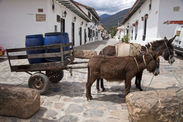 Foto van Donkeys with cart in a street of Villa de LeyvaVilla de Leyva - Colombia