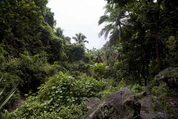 The thick tropical vegetation above the Mutsamudu river | Hombo hike | Comoros
