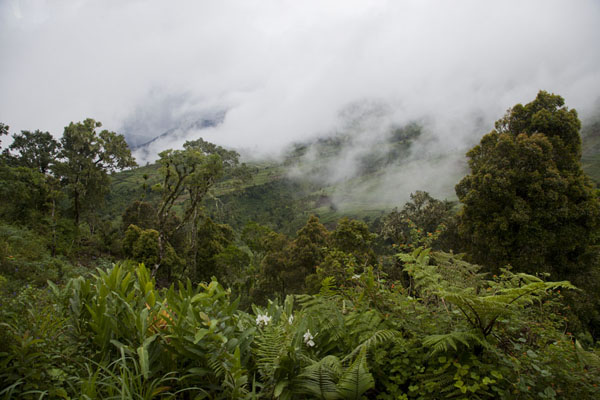 Clouds lying on the lush vegetation on the slopes of Mount Ntringui | Mount Ntringui hike | Comoros
