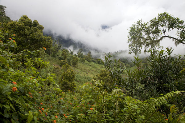 Flowers and trees, with clouds lying low on the hills | Mount Ntringui hike | Comoros