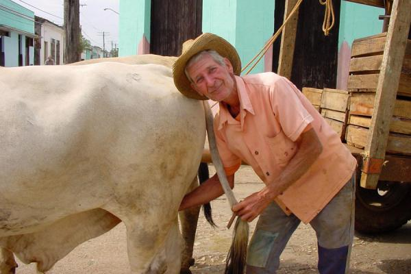 Proud of his ox | Cuban people | Cuba