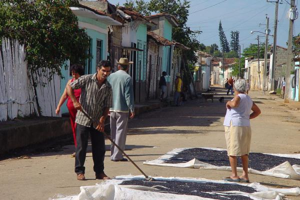 Drying beans (frijoles) in the street | Vida callejera cubana | Cuba
