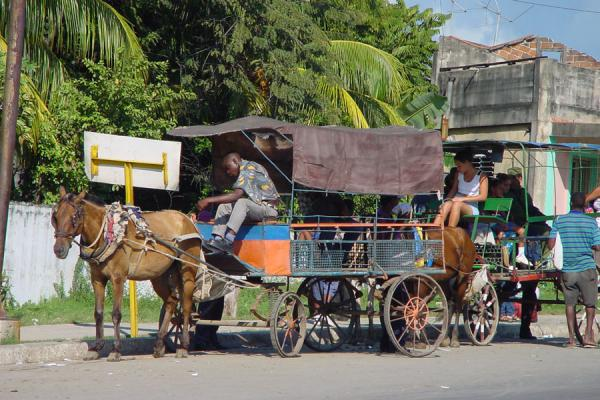 Picture of Horse carts in Cuba