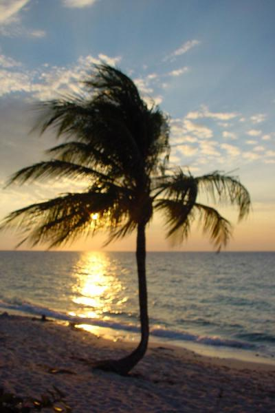 Palm tree against a setting sun | María La Gorda | Cuba