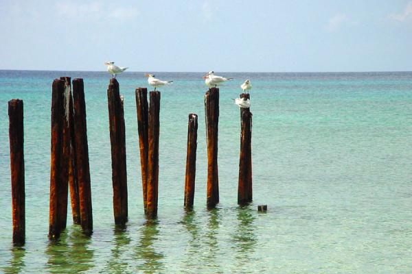 Picture of Seabirds taking a sunbathCuba - Cuba