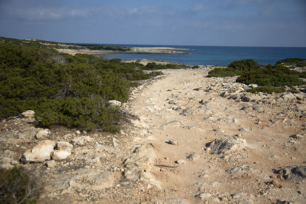 Foto van The rocky track at the northeast side of Akamas peninsulaAkamas - Cyprus
