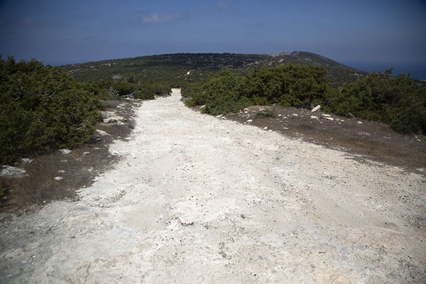 Foto van The track running north-south on Akamas peninsulaAkamas - Cyprus