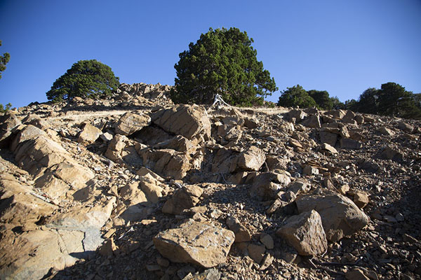Slope with rocks and trees at the western side of Artemis trail | Sentier Artémis | Chypre