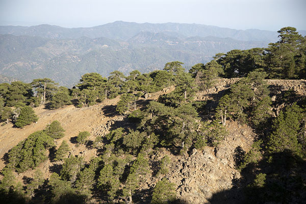 View of the slopes of Mount Olympus and other Troodos mountains in the background | Sentiero Artemis | Cipro