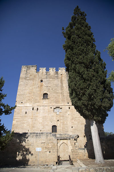 Poplar tree flanking the keep of Kolossi castle | Kasteel van Kolossi | Cyprus