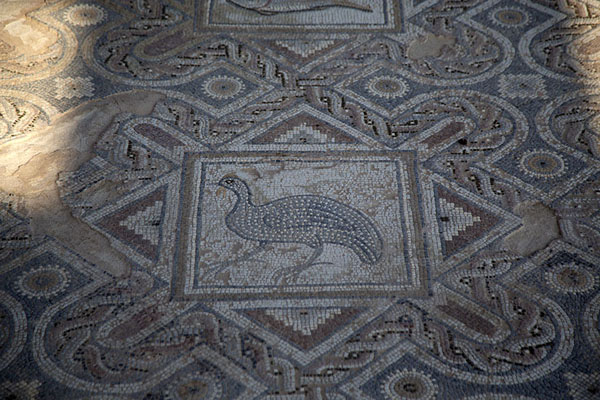 Fragment of a mosaic in the house of Eustolios | Kourion | Chypre