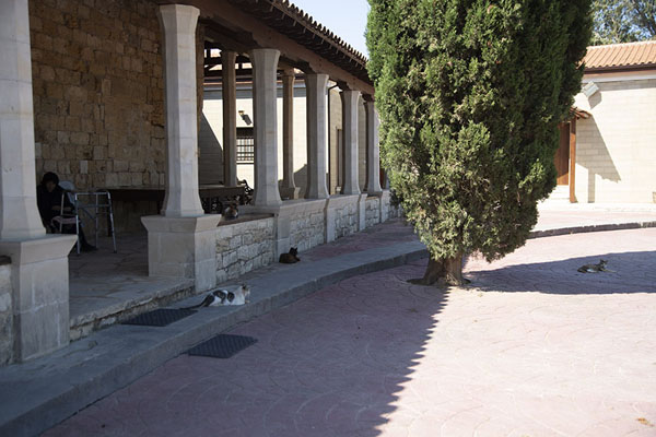 Photo de Cats outside the church of the monastery - Chypre - Europe