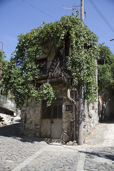 Plants growing around this corner house in Palaiochori | Troodos mountain villages | 塞浦路斯
