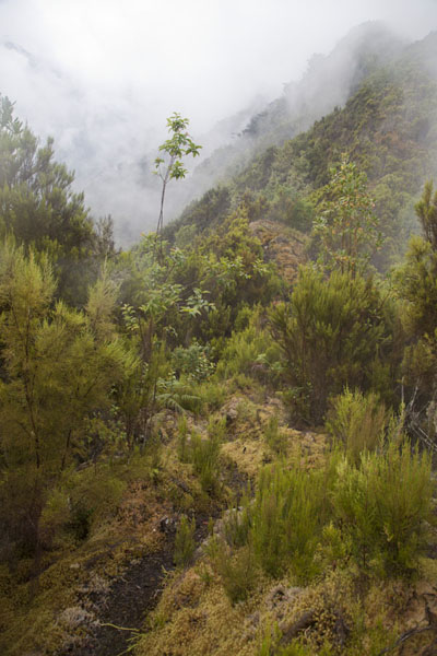 Picture of The Rwenzori trail below Mahangu HutRwenzori - Democratic Republic Congo
