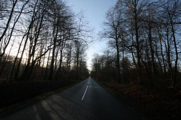 Picture of Vejle Fjord (Denmark): Road cutting through forest near Vejle Fjord
