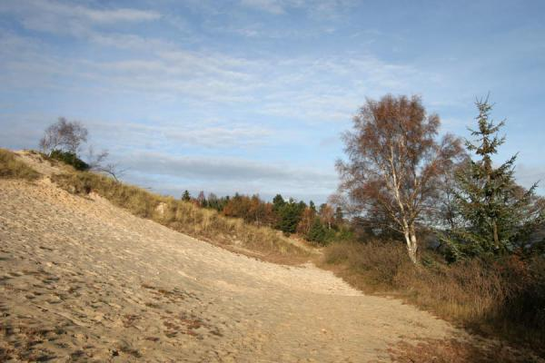 Picture of Vejle Fjord (Denmark): Trees and sand dunes near Vejle Fjord