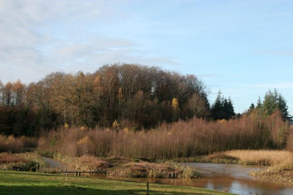 Picture of Vejle Fjord (Denmark): Trees and a pond near Vejle Fjord