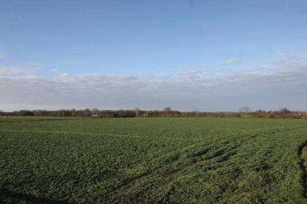 Picture of Vejle Fjord (Denmark): Flat agricultural landscape close to Vejle Fjord