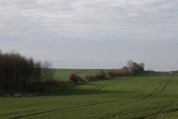 Picture of Landscape in East Jutland: treeline in undulating terrain