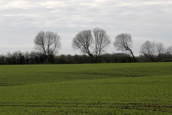 Trees in the middle of a typical landscape | Vejle Fjord | Denmark