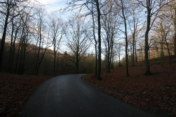 Picture of Vejle Fjord (Denmark): Road through the forest near Vejle Fjord