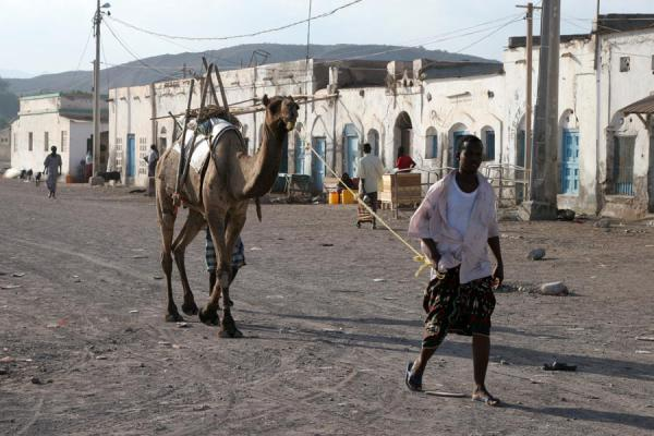 Picture of Man in Tadjoura leading his camel over the boulevardTadjoura - Djibouti