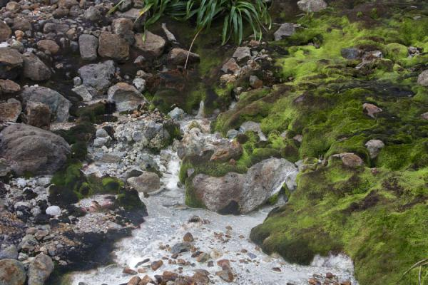 Picture of Moss-covered rocks and sulphur water running down the Valley of Desolation - Dominica - Americas