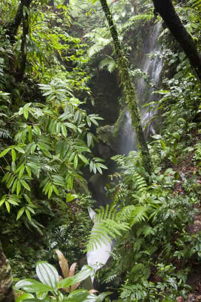 Small waterfall on the way to the Valley of Desolation | Boiling Lake | Dominica