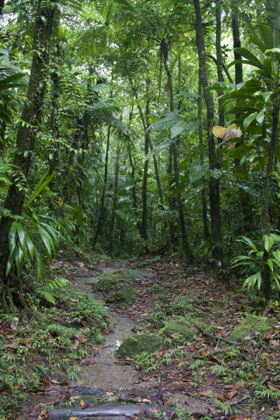 Foto van Trail through the forest on the way to the Valley of DesolationBoiling Lake - Dominica