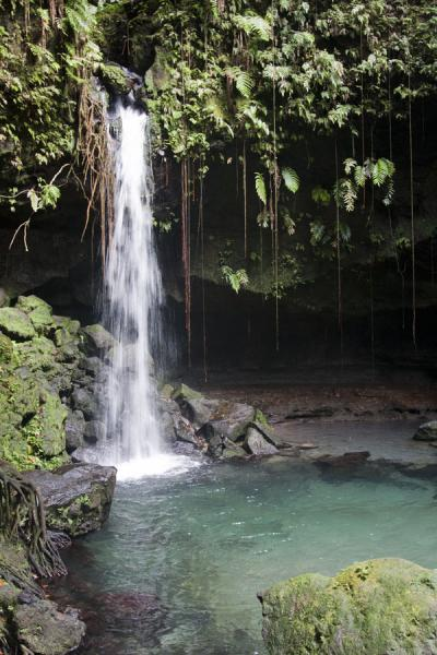 Foto de Overview of Emerald Pool and waterfallEmerald Pool - Dominica