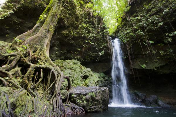 Foto de Waterfall at Emerald Pool with solid treeEmerald Pool - Dominica