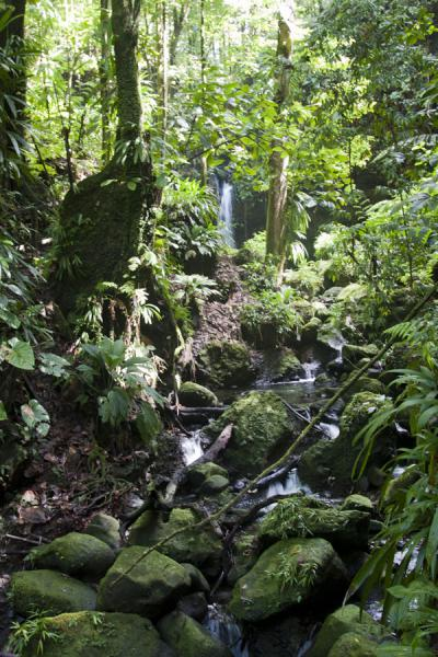 Emerald Pool with river and lush vegetation | Emerald Pool | Dominica