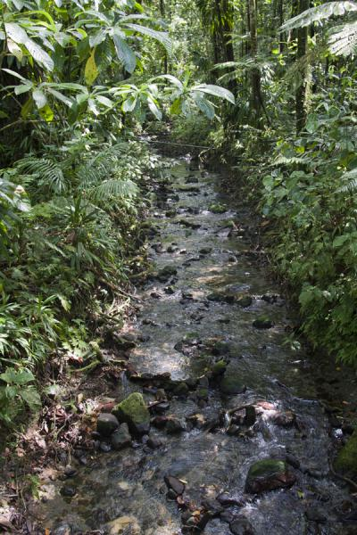Foto de River near Emerald PoolEmerald Pool - Dominica
