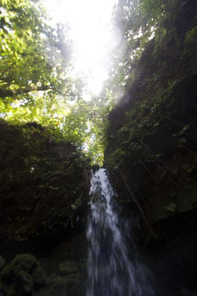 Looking up Emerald Pool waterfall from below | Emerald Pool | Dominica