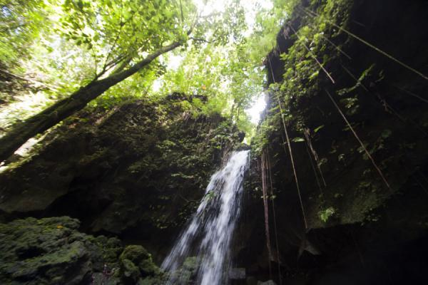 Looking up Emerald Pool and surrounding trees | Emerald Pool | 多明尼加