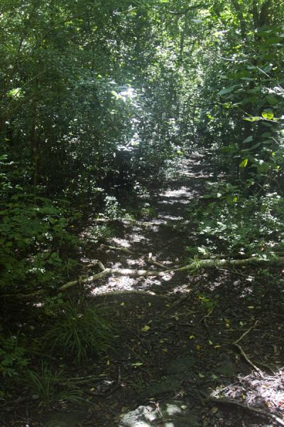 The path leading up the hill at Cabrits National Park | North Dominica | Dominica