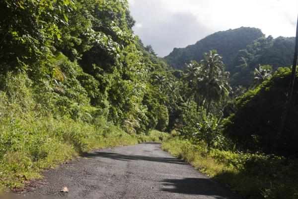 Picture of Road cutting right through the lush vegetation of North Dominica