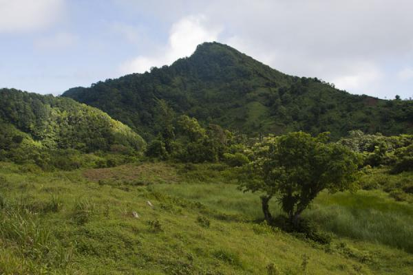 Picture of Trees and a hill in the north of Dominica