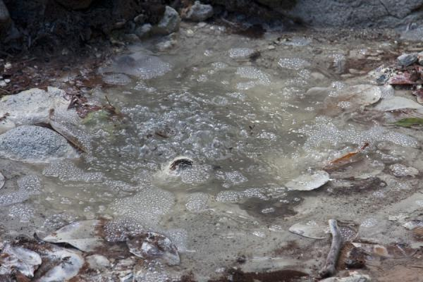 Foto de The cold sulphur springs in the north of the islandNorte de Dominica - Dominica