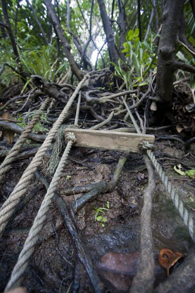 Picture of Ravine Cyrique waterfall (Dominica): Rope ladder facilitating the visitor of Ravine Cyrique